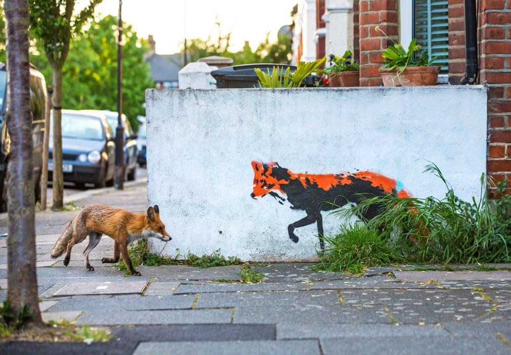Uma raposa na cidade de Londres (por Matthew Maran)
