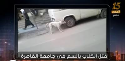 قتل الكلاب بجامعة القاهرة