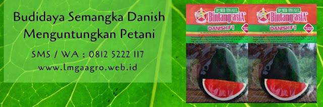 semangka danish,budidaya semangka,benih semangka,bibit semangka,buah semangka,cara menanam semangka,lmga agro