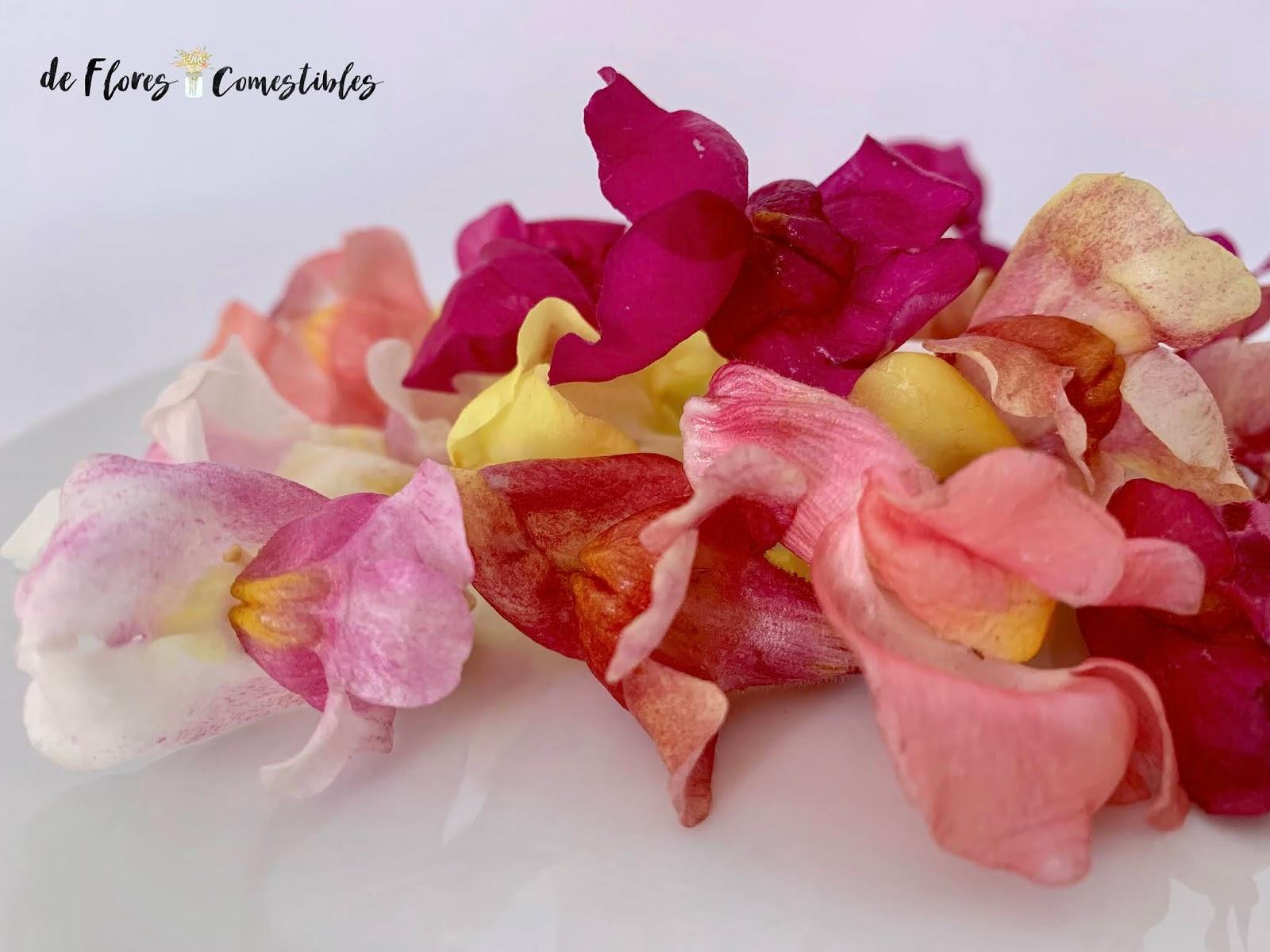 boca de dragón flor comestible