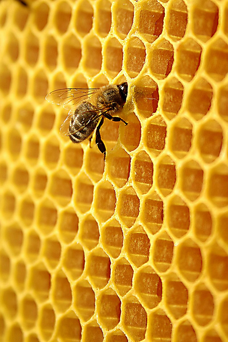 Apicultor explica por qué tuvo que incinerar 2,5 millones de abejas