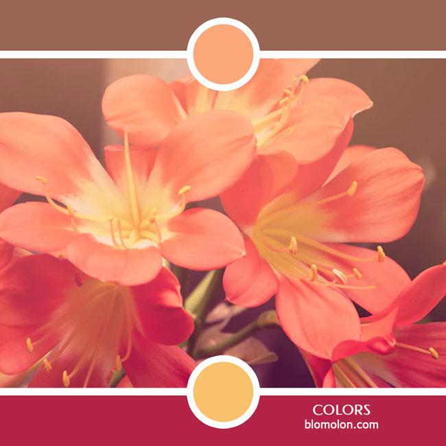 variedad_en_color_color_55