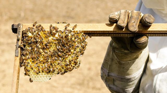 Пчелите са Най-Важният Вид на Земята