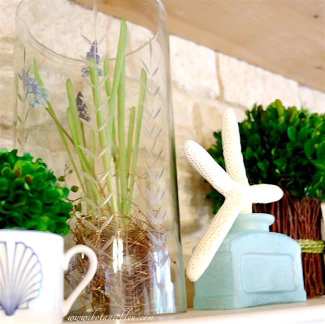 white-starfish-in-sea-green-glass-jar-for-coastal-look