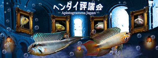 ヘンダイ評議会 - Apistogramma Japan - on facebook