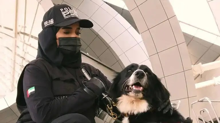 In Thailand: Training of police dogs to detect people infected with Corona by sniffing a human sweat