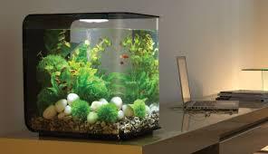 Cara Membuat Aquarium Ikan Cupang