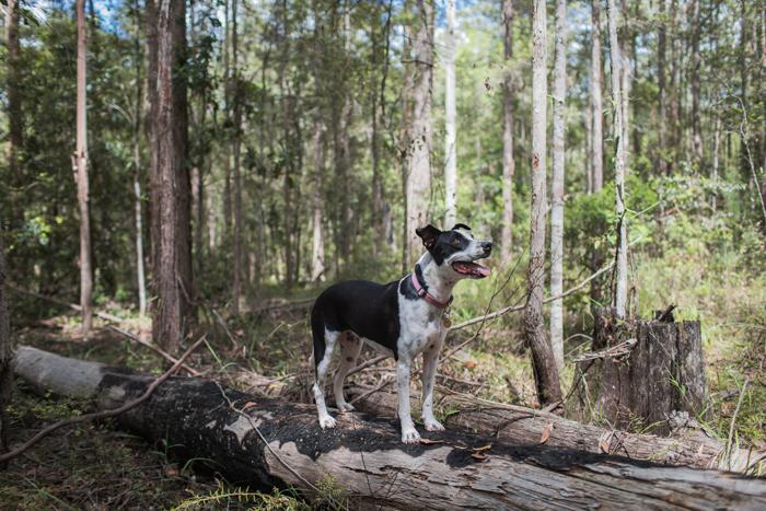 joop the dog on log