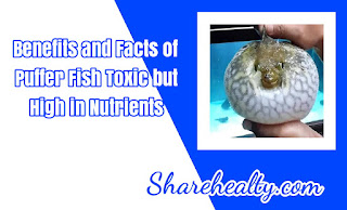 15 Benefits and Facts of Puffer Fish Toxic but High in Nutrients