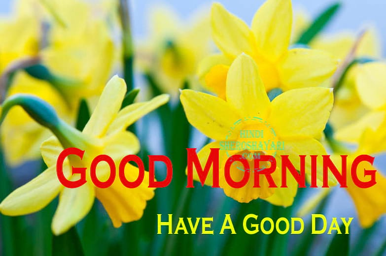 Good Morning Blessings With Daffodils Flowers