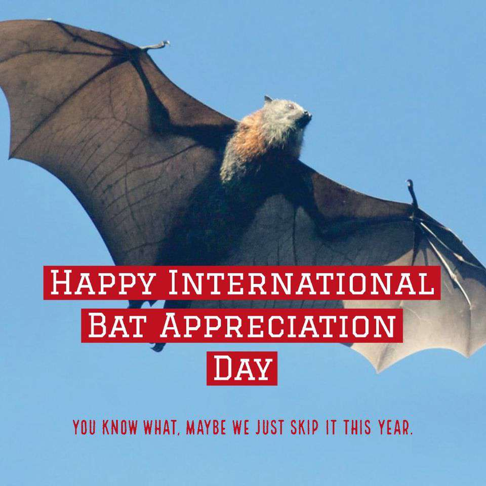 International Bat Appreciation Day Wishes Images download