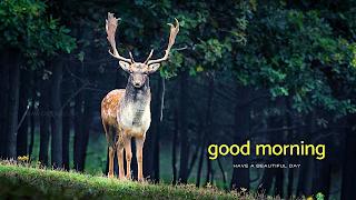 good morning wild animal stag deer greetings