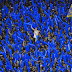 Com expulsão bizarra de Dedé pelo VAR, Cruzeiro perde para o Boca e se complica na Libertadores