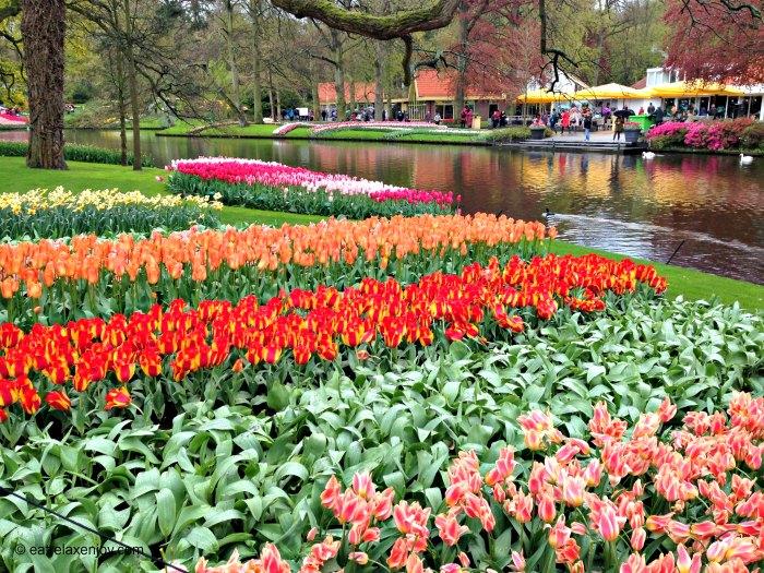 """גני קקנהוף """"גני האביב"""" בהולנד"""