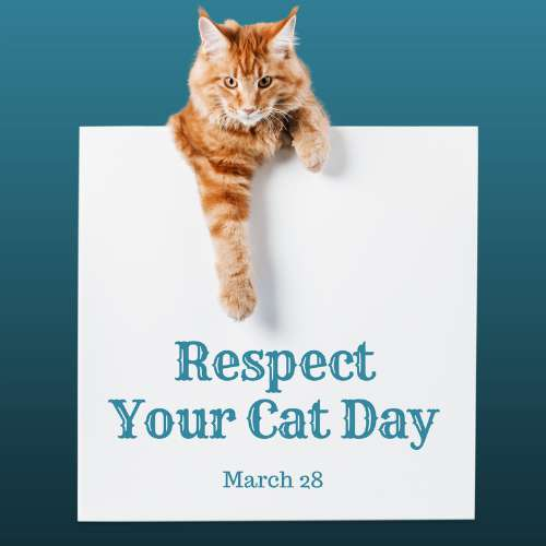 Respect Your Cat Day Wishes Unique Image
