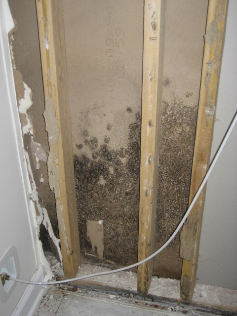 Mold Inside Wall Photo Pdic Database