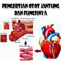 Pengertian Otot Jantung dan Fungsinya