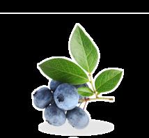 blackthorn-berries