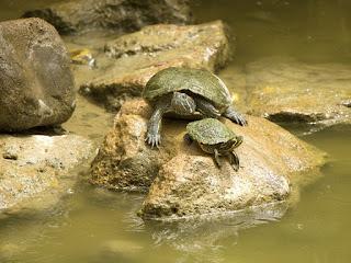 merawat-kura-kura-akuatik.jpg