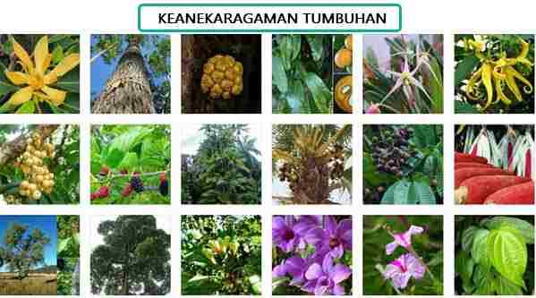 Keanekaragaman Tumbuhan