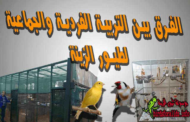 تربية الطيورالفردية والجماعية  ميزاتها وسلبياتها