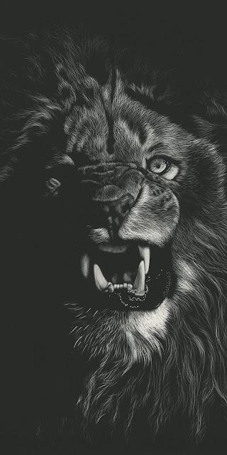 خلفية هاتف أسد Lion يزأر صورة أبيض وأسود مميزه