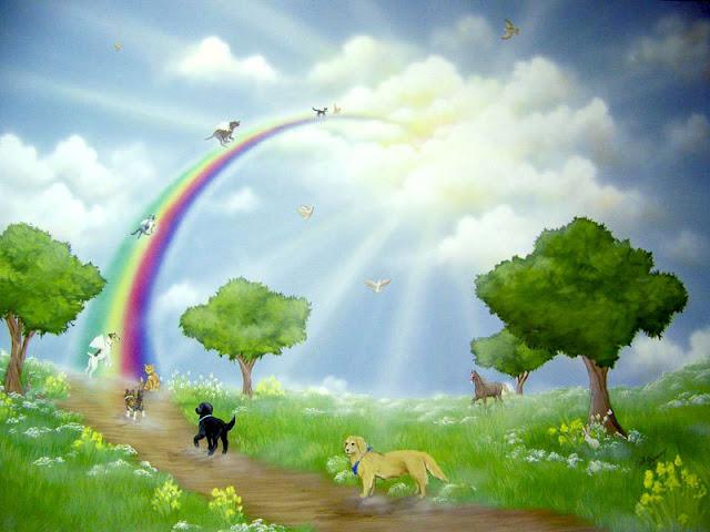 Dogs Crossing Poem Bridge Rainbow