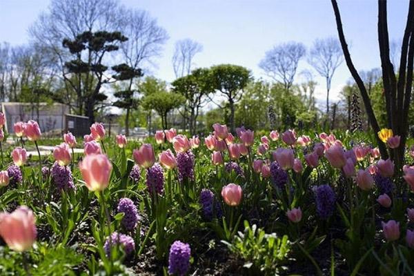 حديقة تولن البيئية