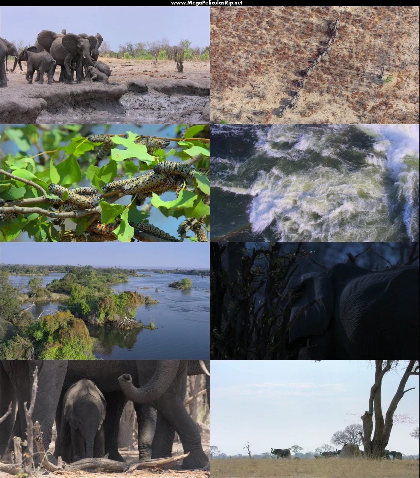 Elephant 1080p Latino