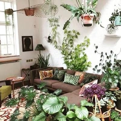 loka das plantas