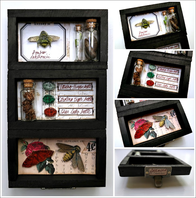 DIY Specimen Drawer by Dana Tatar for Canvas Corp Brands
