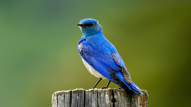 Wallpapers Birds, خلفيات طيور, صور خلفيات طيور جميلة, خلفيات 4k, صور خلفيات, صور خلفيات 4k