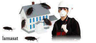 شركة تنظيف حشرات بجدة , شركات تنظيف الحشرات بمكة