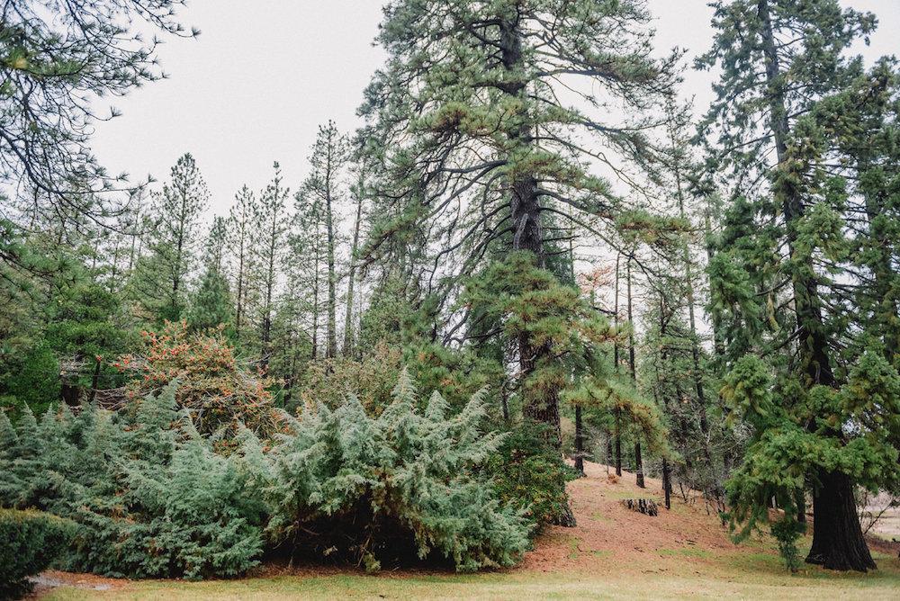 Rustic Mountain Wedding Inspiration Shoot Southern California