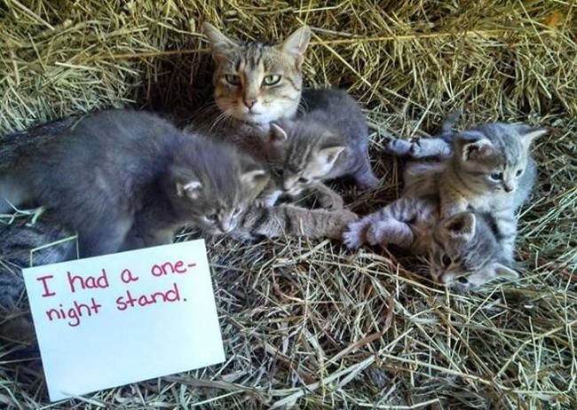 Cat Confessions