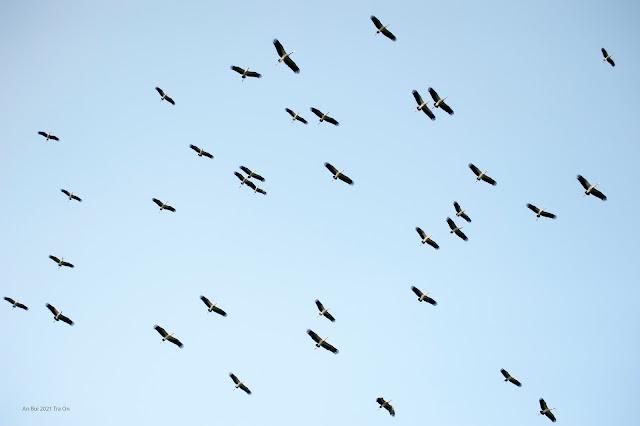 Vườn chim Hai Chìa, Trà Ôn