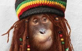 Fond ecran humour animaux - Fonds d'écran HD