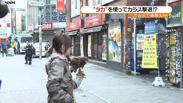 ญี่ปุ่นใช้เหยี่ยวไล่ฝูงอีกาในย่านชิบุยะ
