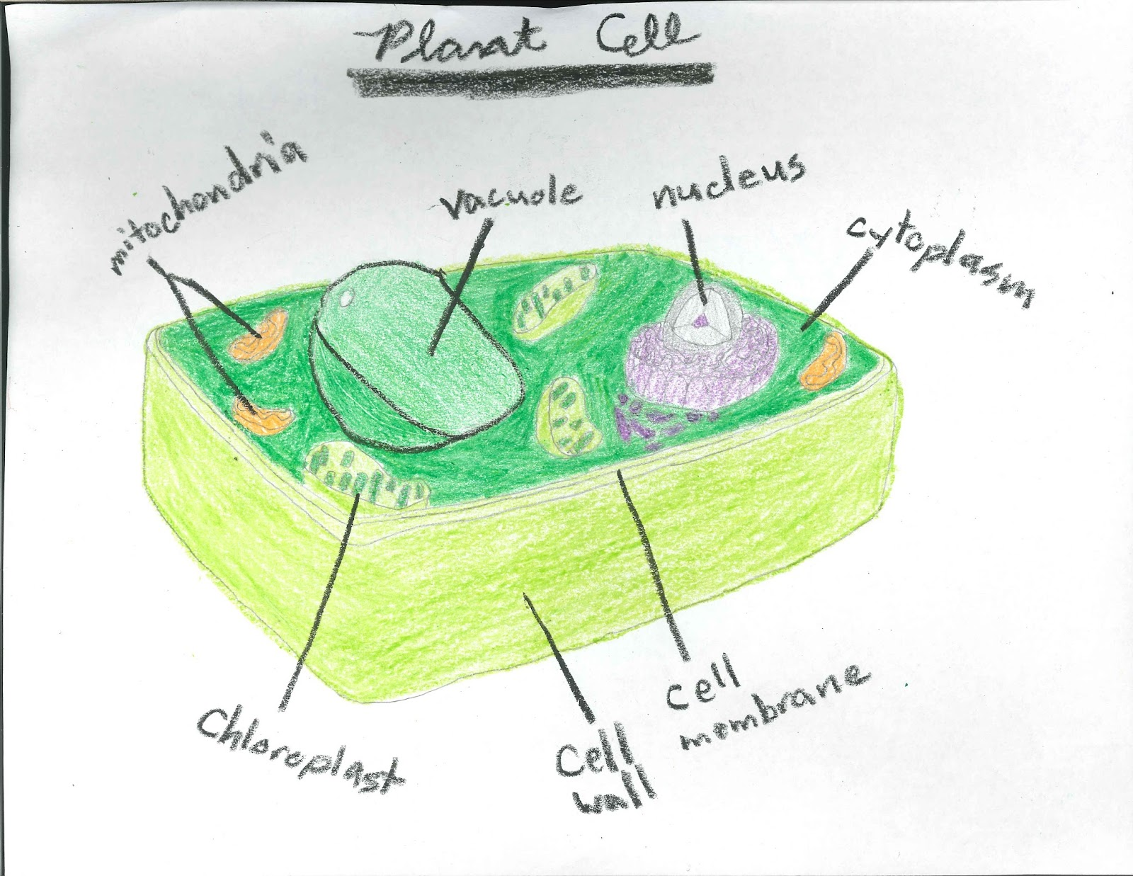 hight resolution of Cells - Lessons - Blendspace