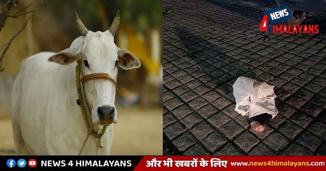 हिमाचल में हो रही गोवंश की कटाई! बीच बाजार पड़ी मिली कटी हुई टांग, RSS ने किया मुखर विरोध