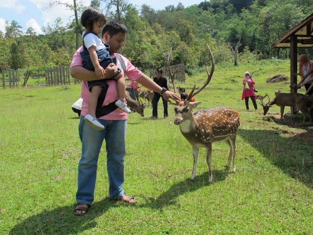 Tempat Wisata Terbaik Di Bogor Untuk Liburanmu Yang Lebih Menyenangkan