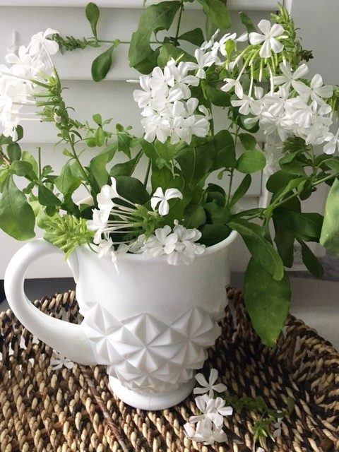 MIlk Glass and White Plumbago