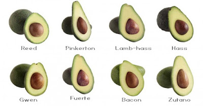 https://www.californiaavocado.com/how-tos/avocado-varieties.aspx