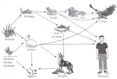 soal uraian usbn biologi tentang jaring-jaring makanan