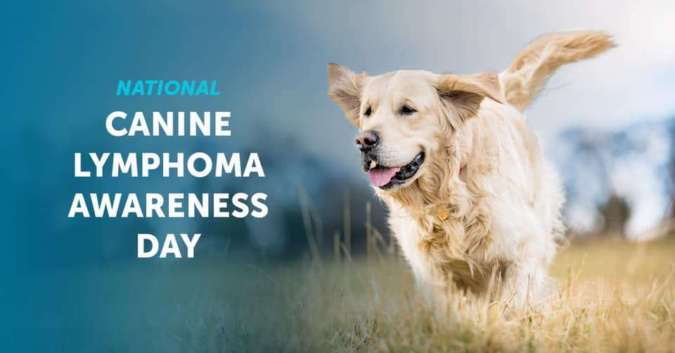 National Canine Lymphoma Awareness Day Wishes Sweet Images