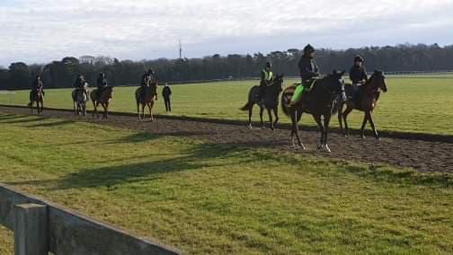 Стартират първите за годината търгове на чистокръвни коне в Англия