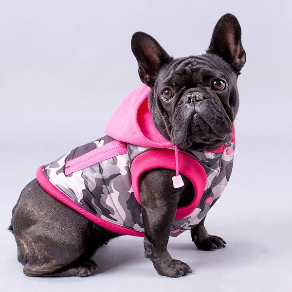 Ropas. Los perros odian la ropa