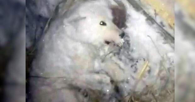 В России мужчина облил собаку водой и оставил на 50-градусном морозе