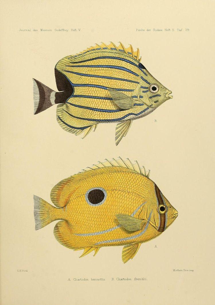 Peixes | Pisces | Piscis | Poissons | 魚