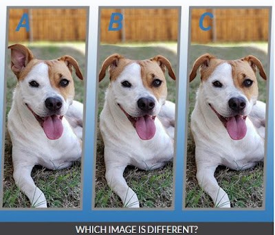Quiz Diva Spot the Different Dog Quiz Image9